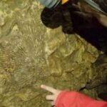 découverte de fossile dans le calcaire du jura en spéléologie